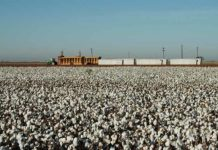 Figure 1: This year The High Plains of Texas will have 20% increase in cotton planting acreage.