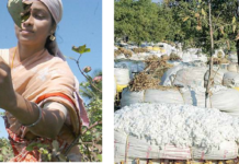 Figure 3: Indian cotton fiber giving a major boost in rural economy. Bangladesh is the major importer of Indian cotton.