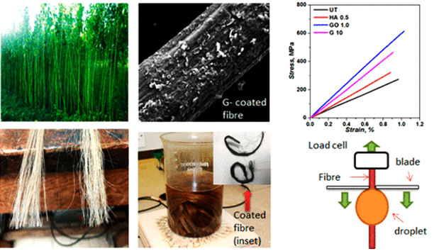 High performance graphene-based natural fiber composites