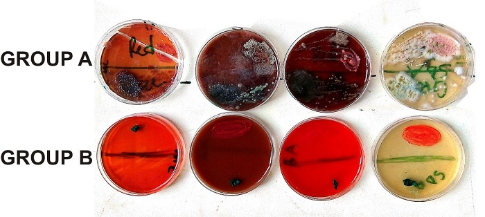 microbes attack finished textile print pastes