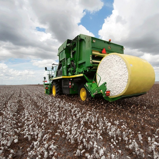 Australian cotton sector 2019