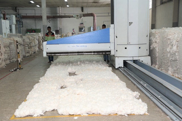 Selection of cotton growth