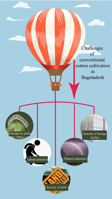 conventional-cotton-cultivation-Bangladesh