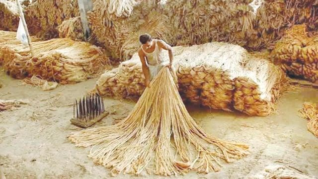India-rejects-raw-jute-import-Bangladesh